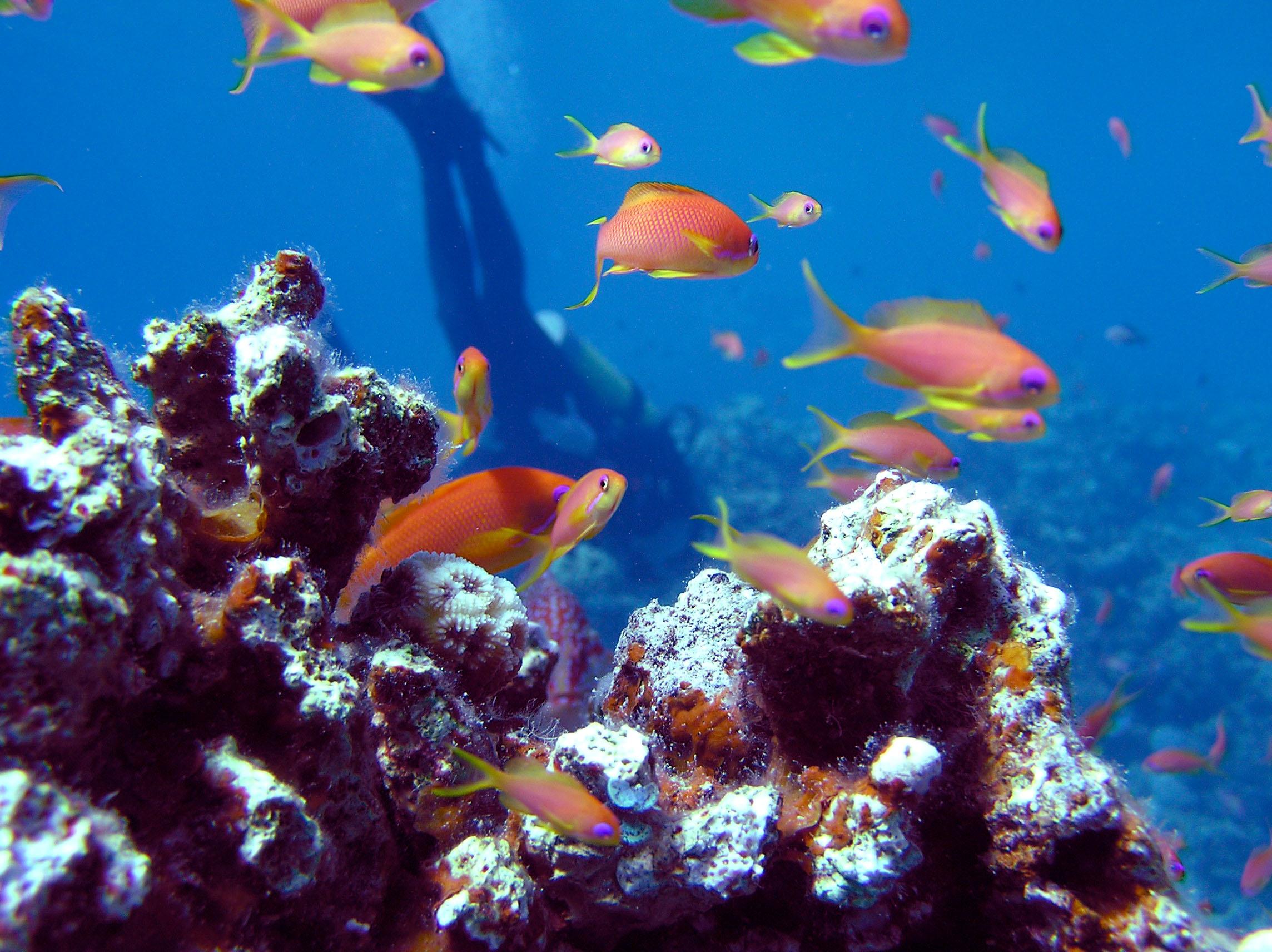 diver-1381076.jpg