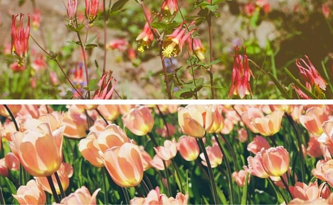 garden-comparison.jpg